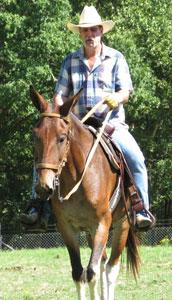 mule-ride